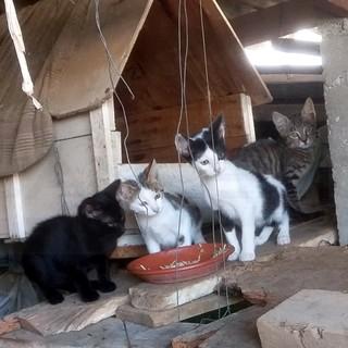 Taggia: quattro gattini cercano una famiglia e tanto affetto, eccoli pronti per voi (Foto)
