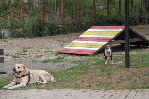 L'area cani di San Martino