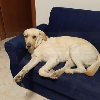 Sanremo: smarrito da cinque giorni nella città vecchia il cane 'Koppi', l'appello dei proprietari