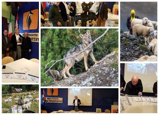Convivenza uomo-lupo sulle Alpi: parte il progetto LIFE WolfAlps EU che mette insieme Italia, Francia, Austria e Slovenia