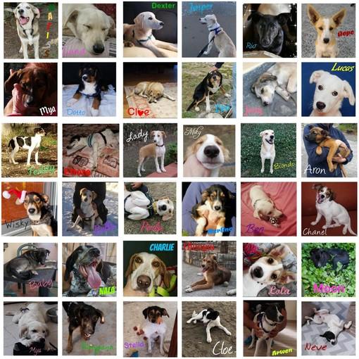 Tantissimi cani hanno trovato casa grazie a 'Quattrozampe': i ringraziamenti de 'La Zampa sul Cuore'