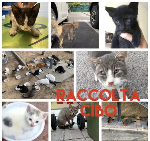Arma di Taggia: domani al 'Pet Store' una raccolta di cibo per i randagi della 'Lega del Gattino'