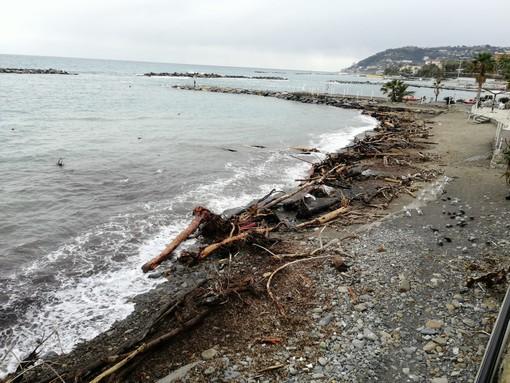 La legna arrivata sulle spiagge con la tempesta 'Alex' di ottobre