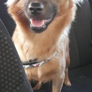 Riva Ligure: smarrita la cagnolina Lola in zona Le Grange vicino alla casa di riposo