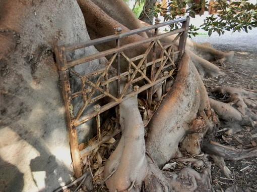 Bordighera: il museo Clarence Bicknell apre le porte nel giorno di Ferragosto