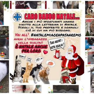 Sanremo: anche i gattini ospitati al rifugio Enpa scrivono la loro 'letterina' a Babbo Natale (Foto)