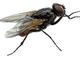 """Camporosso: 'invasione' anomala di mosche quest'anno in città, il Sindaco """"Ci siamo attivati per contrastare il problema"""""""