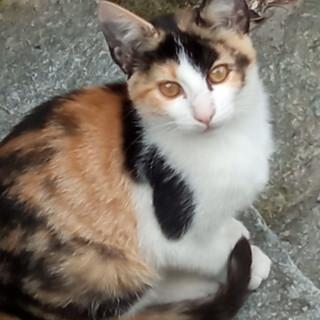 Sanremo: due gattini di tre mesi cercano nuove casette