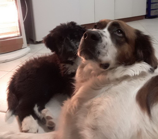 Ventimiglia: smarriti due cani sulle immediate alture della città, l'appello dei proprietari (Foto)