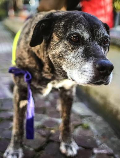 Ospedaletti: è morta Masha la cagnolona che era la mascotte della locale Protezione Civile (Foto)