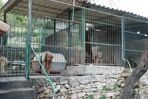 Sanremo: bando da 600mila euro per l'affidamento e mantenimento degli animali, l'Enpa chiede un 'ritocco' del bando