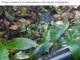 """Mancanza d'acqua a Vessalico, la Sindaca posta la foto di un tubo rotto: """"L'episodio non resterà impunito"""""""
