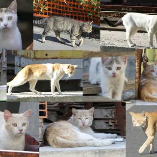 Arma di Taggia: venerdì prossimo da 'PetStore' una raccolta di cibo per i randagi con la 'Lega del gattino'