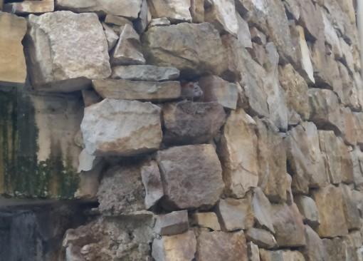 Sanremo: degrado, sporcizia e topi dietro la Chiesa di San Giuseppe, lettore chiede un intervento (Foto)
