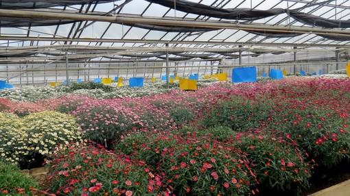 Coop a fianco dei produttori di piante e fiori italiani: a rischio distruzione la produzione in serra per l'impatto dell'emergenza