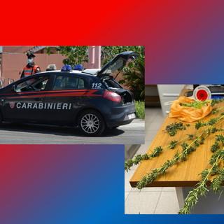 Sanremo: coltiva marijuana sul balcone di casa, 46enne denunciato dai Carabinieri