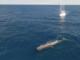 I 16 Comuni costieri fanno squadra per il Santuario dei Cetacei: nasce il progetto 'Costa Balenae'