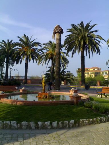 Sanremo: il Comune da il via all'operazione 'Gerico', 16mila piante per 'ripopolare' le palme in città