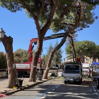 Alberi abbattuti: intervento di PAT, Italia Nostra e comitato spontaneo del verde