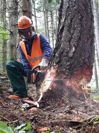 Maggio, mese denso di impegni per la Scuola Forestale di Ormea: svolto il 'Cantiere forestale didattico'