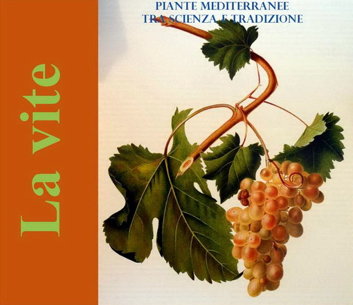 Sanremo: sabato prossimo al 'Museo del Fiore' proseguono gli incontri, questa volta su vite e vino