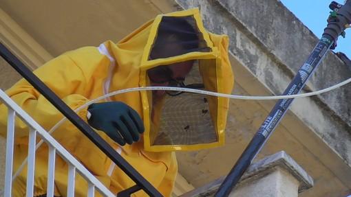 Nelle foto alcuni momenti particolari dell'opera di bonifica, e delle api da miele attaccate dalle vespe Velutine