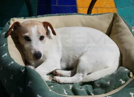 Sanremo: smarrita questa mattina nella zona di corso Inglesi la cagnolina Zoy, l'appello del proprietario (Foto)