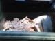 I 'furbetti del cassonetto' colpiscono anche a Cervo: abbandonati materiali inerti in un contenitore della spazzatura a Capo Mimosa
