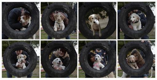 Lieto fine per sette cuccioli della stessa mamma, tutti adottati da altrettante famiglie