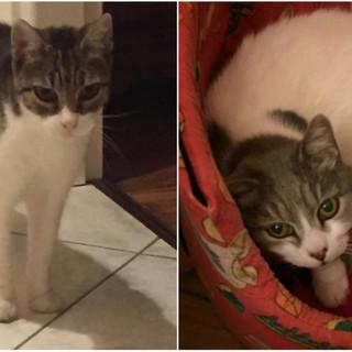 Sanremo: si cerca una nuova casa per due gatte, l'anziana padrona non si può più prendere cura di loro