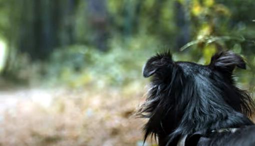 Online video contro l'abbandono degli animali diretto dal regista sanremese Marco Di Gerlando