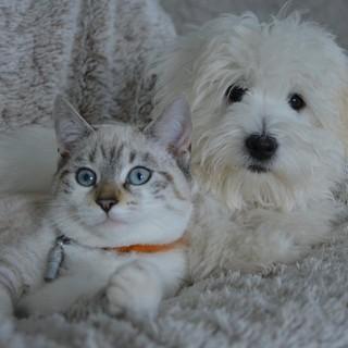 """Assicurazione animali domestici: ConTe.it lancia """"ConTe Cane e Gatto"""""""