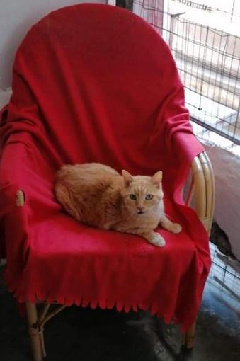Ventimiglia: il gatto Bobo di 17 anni aspetta di essere adottato