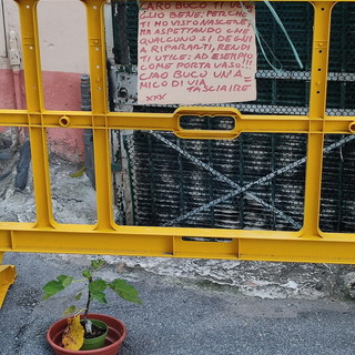 Sanremo: vaso di fiori in un buco nell'asfalto di via Tasciaire, la simpatica provocazione di un abitante