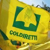 """Giovani imprenditori sempre più attratti dall'agricoltura, Coldiretti: """"Settore chiave per l'economia dei territori"""""""