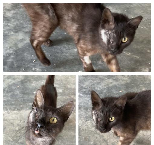 Arma di Taggia: il gatto Box cerca coccole e una casa