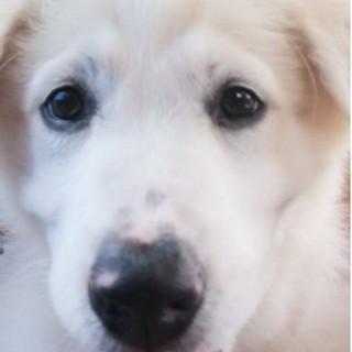 Sanremo: la cucciola Bella è in cerca di una nuova famiglia