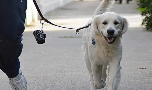 Ventimiglia: animali a passeggio, ma in modo responsabile. Allo studio dell'Amministrazione un'ordinanza restrittiva per i proprietari dei cani