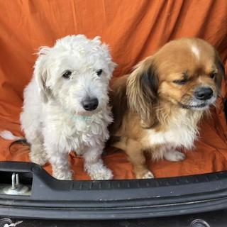 Sanremo: trovati questa mattina in via Padre Semeria i due cagnolini nella foto