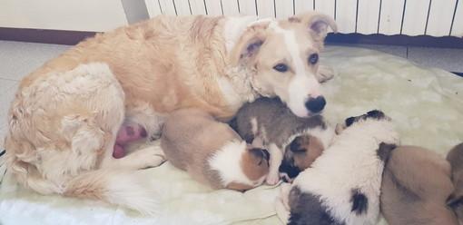 Sanremo: tre bellissime cucciole aspettano di essere adottate