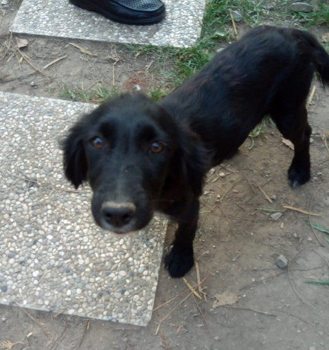 Camporosso: Camilla meravigliosa cucciola cerca casa amore e famiglia
