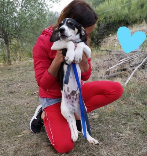 Sanremo: un cucciolo di tre mesi aspetta di essere adottato