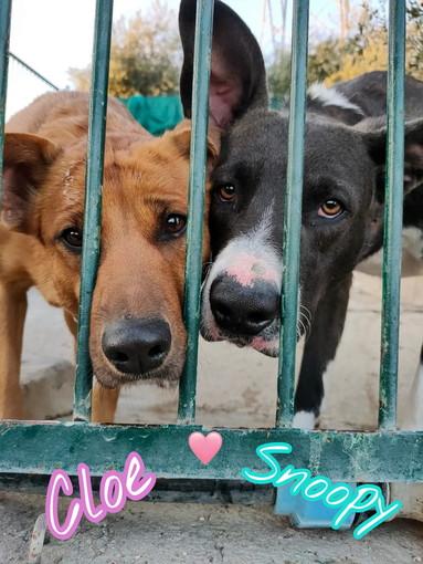 Enpa di Sanremo: Cloe e Snoopy cercano una nuova famiglia