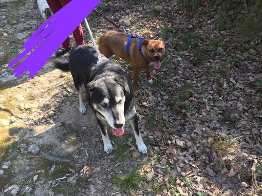 Sanremo: zona Verezzo sono stati smarriti due cani, l'appello del prorietario