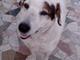 Sanremo: cane ritrovato in via Dante vanerdì scorso, si cercano i proprietari
