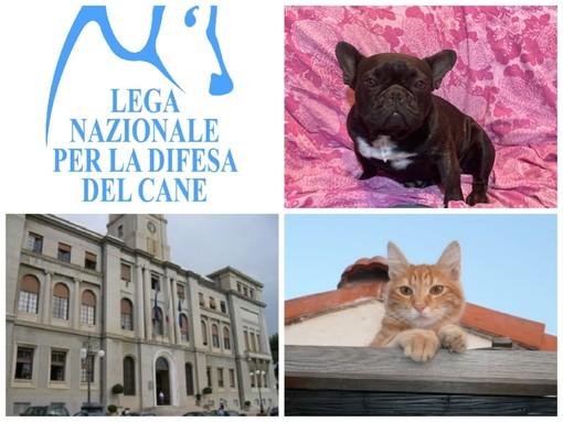 Imperia, contrasto al randagismo e al maltrattamento di animali: stanziati fondi per la sterilizzazione di gatti e cani
