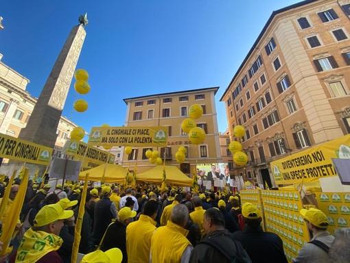 Cinghiali: numero fuori controllo spaventa imprese e società. In Liguria raddoppiate le segnalazioni di incidenti stradali