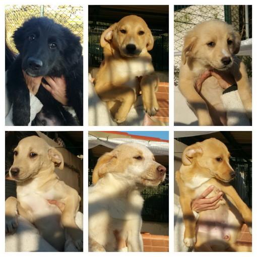 Enpa di Sanremo: sei bellissimi cuccioli e la loro mamma cercano casa.