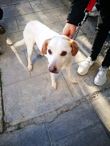 Sanremo: in zona Baragallo, ritrovato un cane con microchip, l'appello ai proprietari