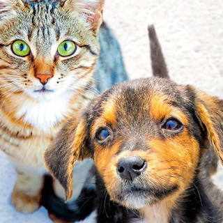 Emergenza sociale: continua l'attività di Accademia Kronos a favore degli animali di proprietà di famiglie in difficoltà